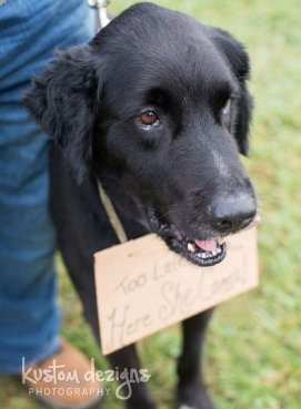 A photo of a canine member of the wedding party.